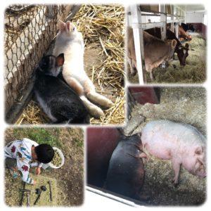 ハイジ牧場の動物達