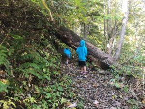 登山道を塞ぐ倒木小