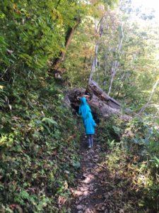 登山道を塞ぐ倒木大