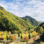 札幌奥座敷「定山渓温泉(定山渓ホテル)」でお泊り紅葉も始まってたよ(^o^)